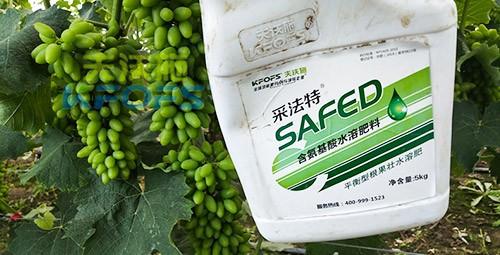 进口水溶肥用这个,葡萄能增产