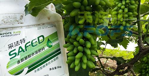 葡萄水溶肥品牌哪个好?案例告诉你!