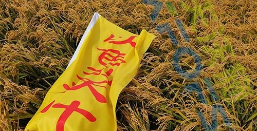 水稻用水溶肥,这三个方面的效果很明显!