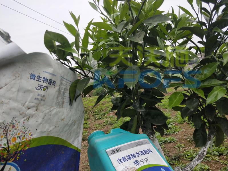 春季果树用什么肥料好?看看您用对了吗?