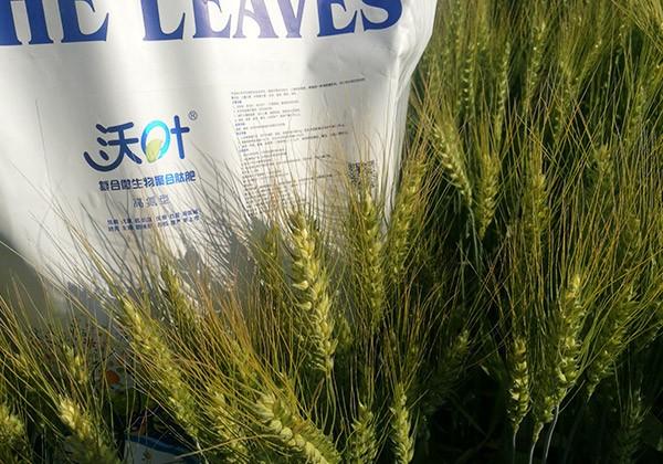 小麦专用肥施肥方案-沃叶篇