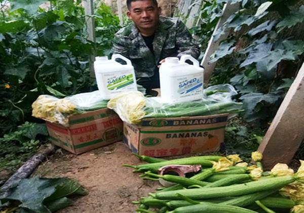蔬菜施肥全优营养方案-采法特篇