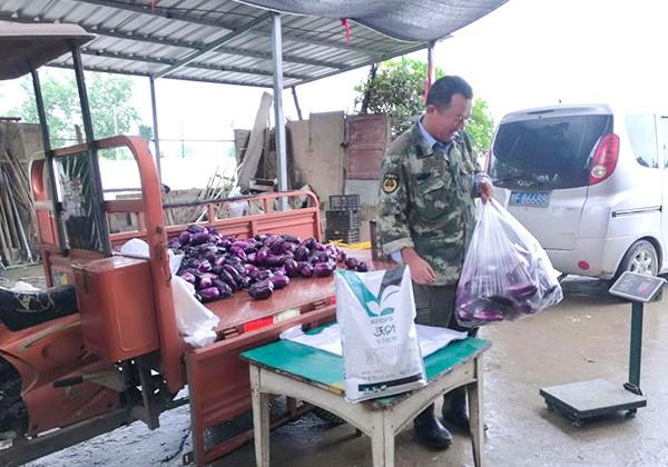 茄子施肥全优营养方案-沃叶篇