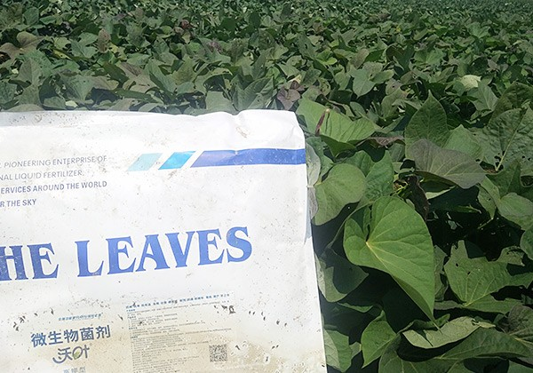 紫薯施肥方案-沃叶篇