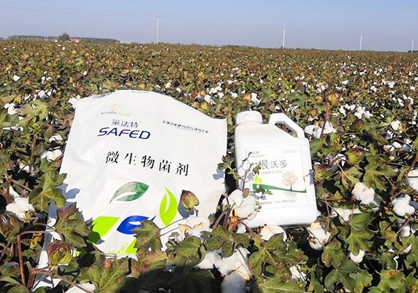 棉花施肥全优营养方案-采法特篇